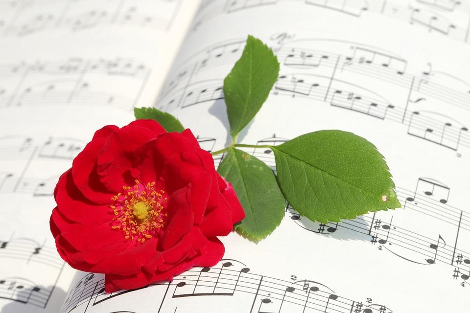 Rose, Roses Flowers, Romantic, Love, Red, Beauty, Petal