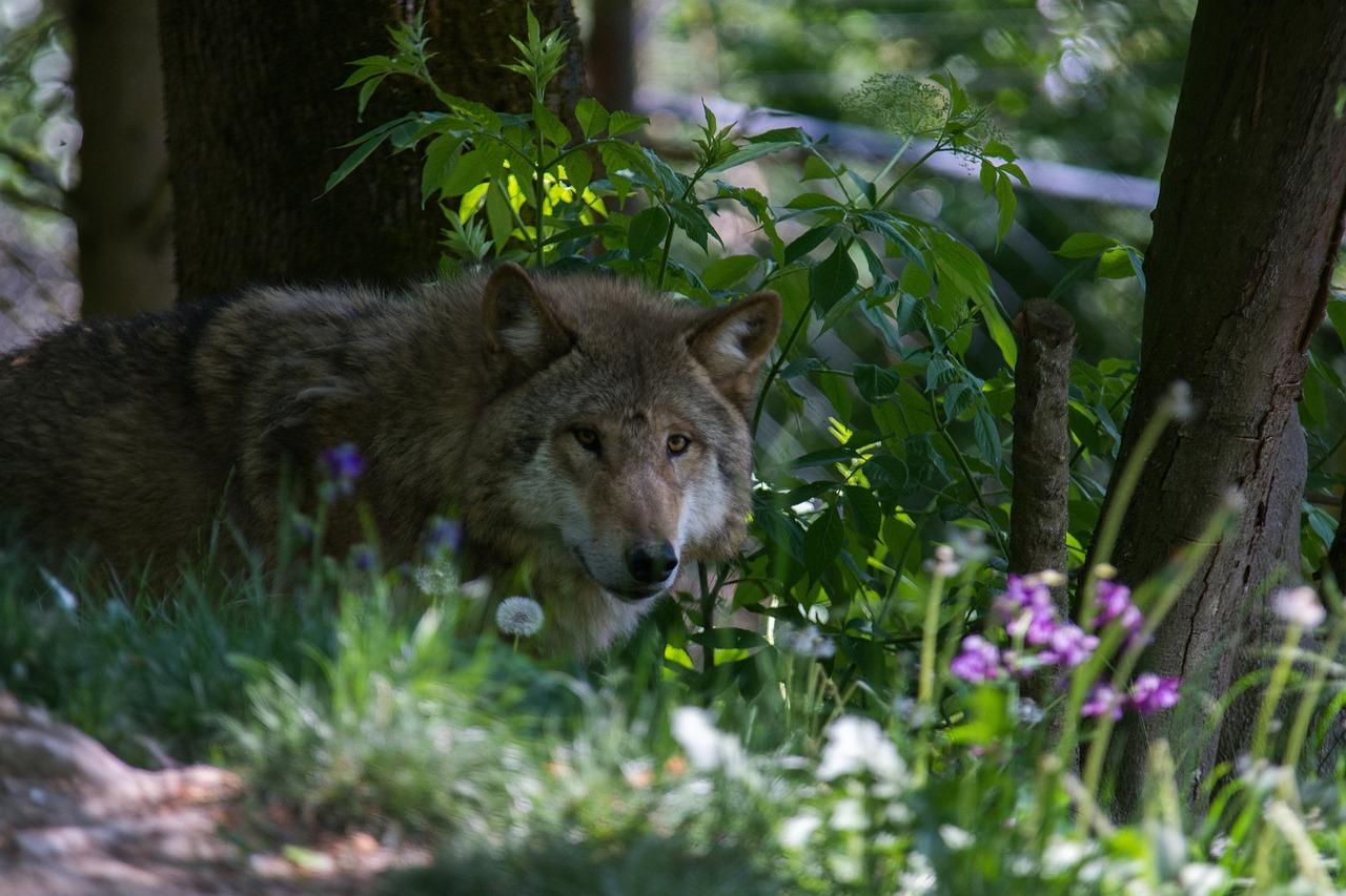 достаточно цветы фото волки было его удивление