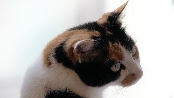 jíst černou stříkající kočička