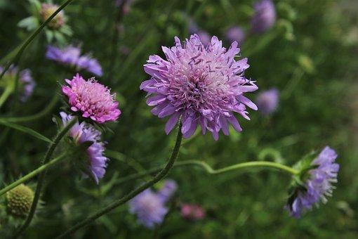 グリーン, バイオレット, 野生の花, 繊細さ, 新鮮です, 工場, 牧草地