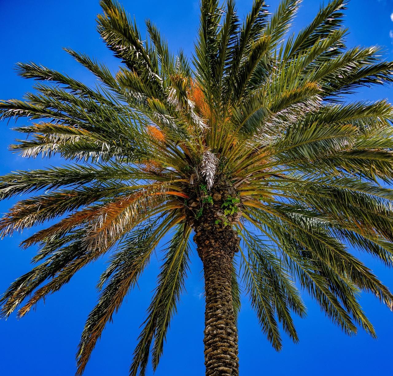 пальмовые деревья картинки люди приобретают