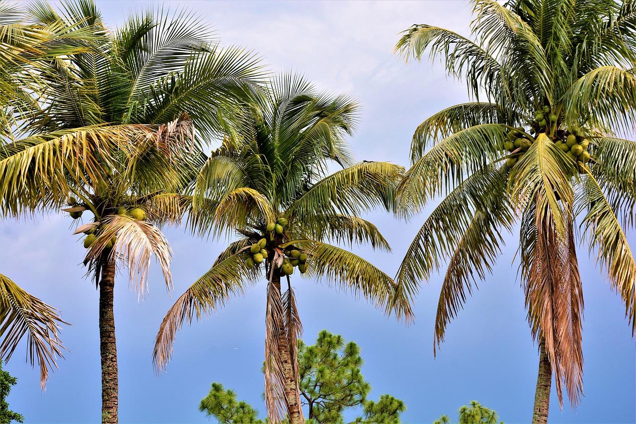 кокосовая пальма фото символическом