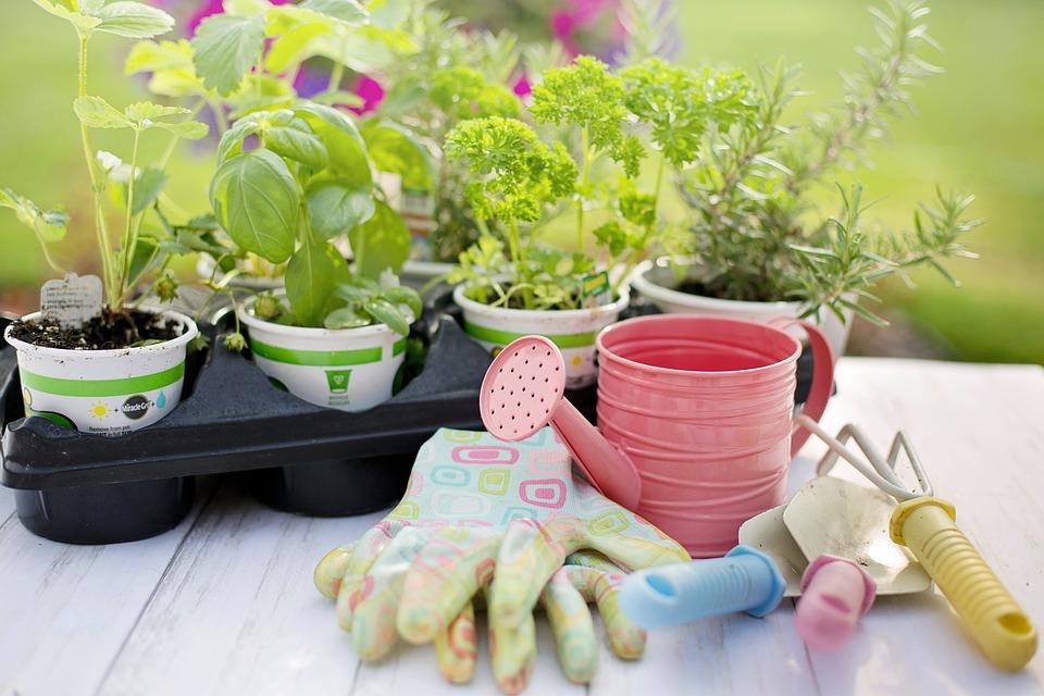 Plantation, Printemps, Herbes, Jardinage, Plantes