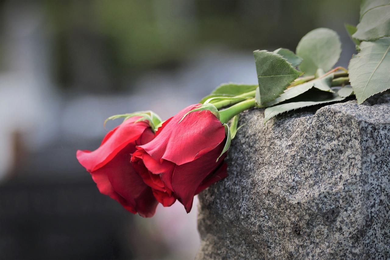 две розы картинка фото можно вязать любой