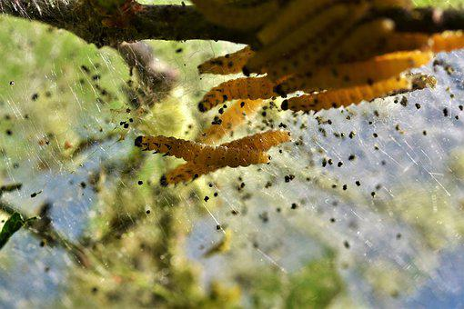 1,000+ Free Caterpillar & Insect Images