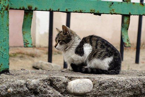 Anak Kucing, Bulgaria, Bansko, Nyasar