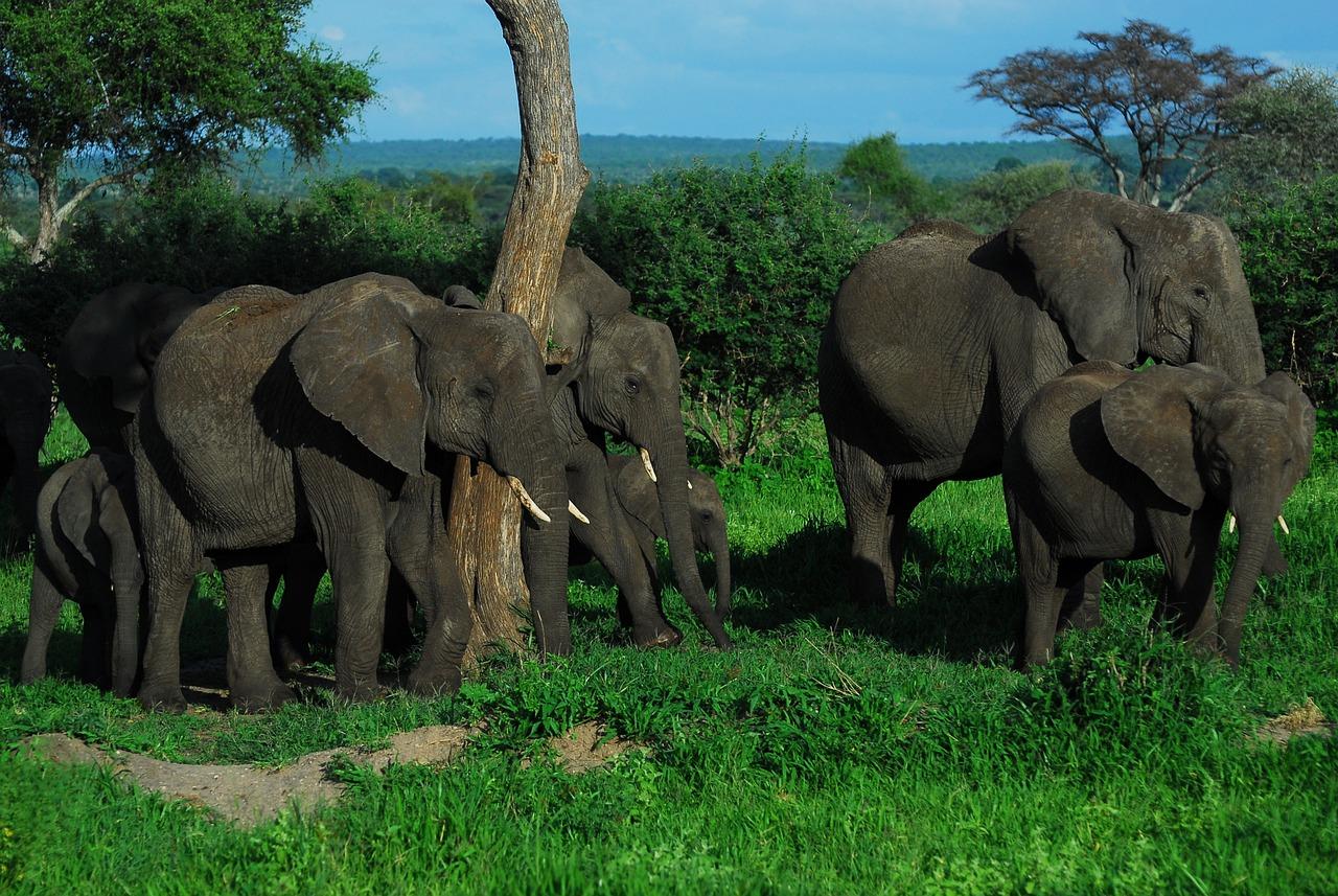 территория, размеры слона картинки доме