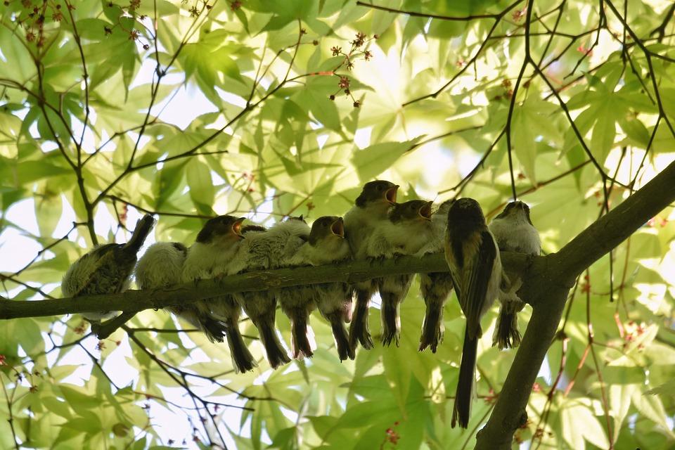 Animal, Forest, Fresh Green, Bird, Wild Bird