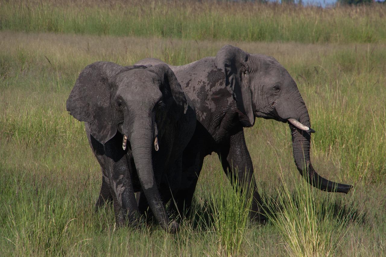 Картинки слоны в джунглях это