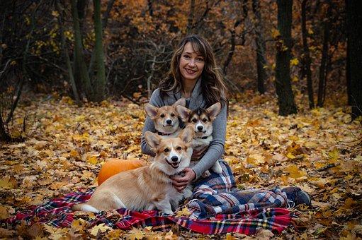 Welsh Corgi Pembroke, Corgi, Three Dogs