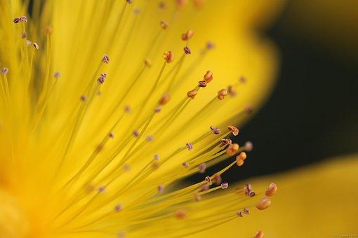 Yellow, Flower, Macro, Nature, Plant