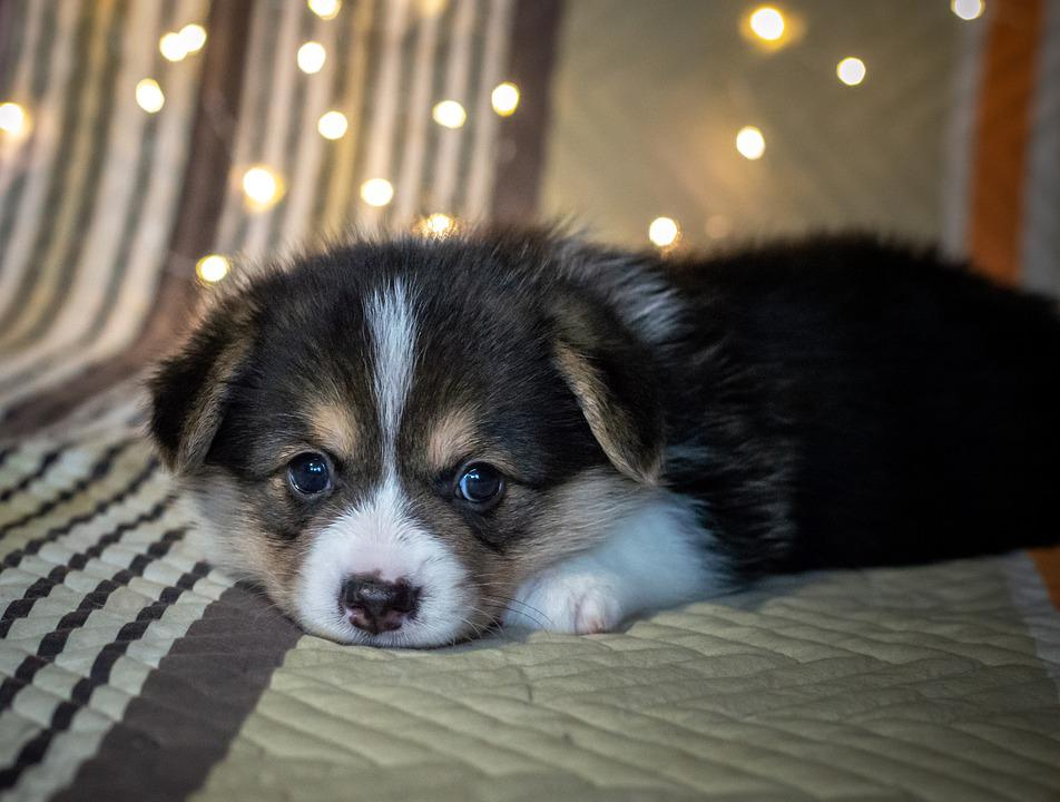 Anak Anjing Lucu Hitam Dan - Foto gratis di Pixabay