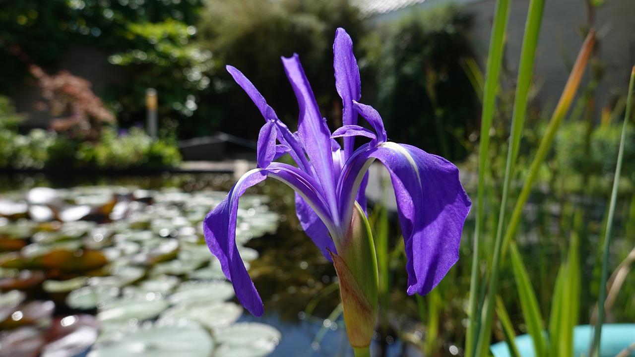каждый день флерделис фото цветка мокрому