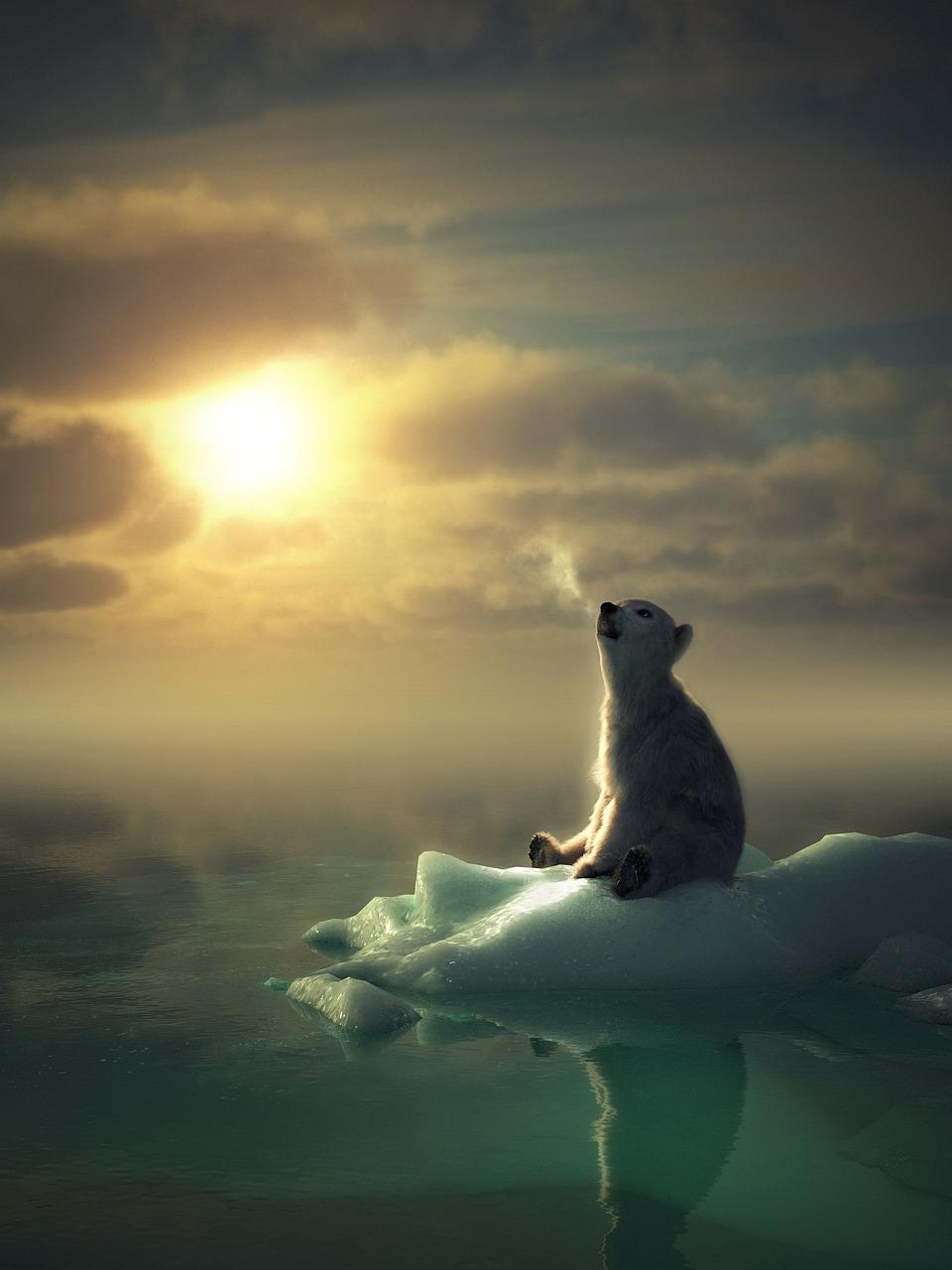 картинки дню солнце и медведь картинки сегодняшний рецепт для