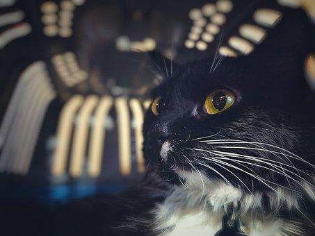 Xxx černá kočička jíst