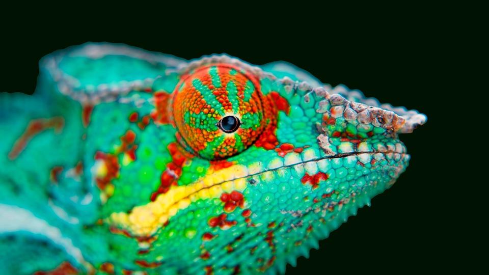 Chameleon, Beautiful Chameleon, Зеленый, Хамелеон