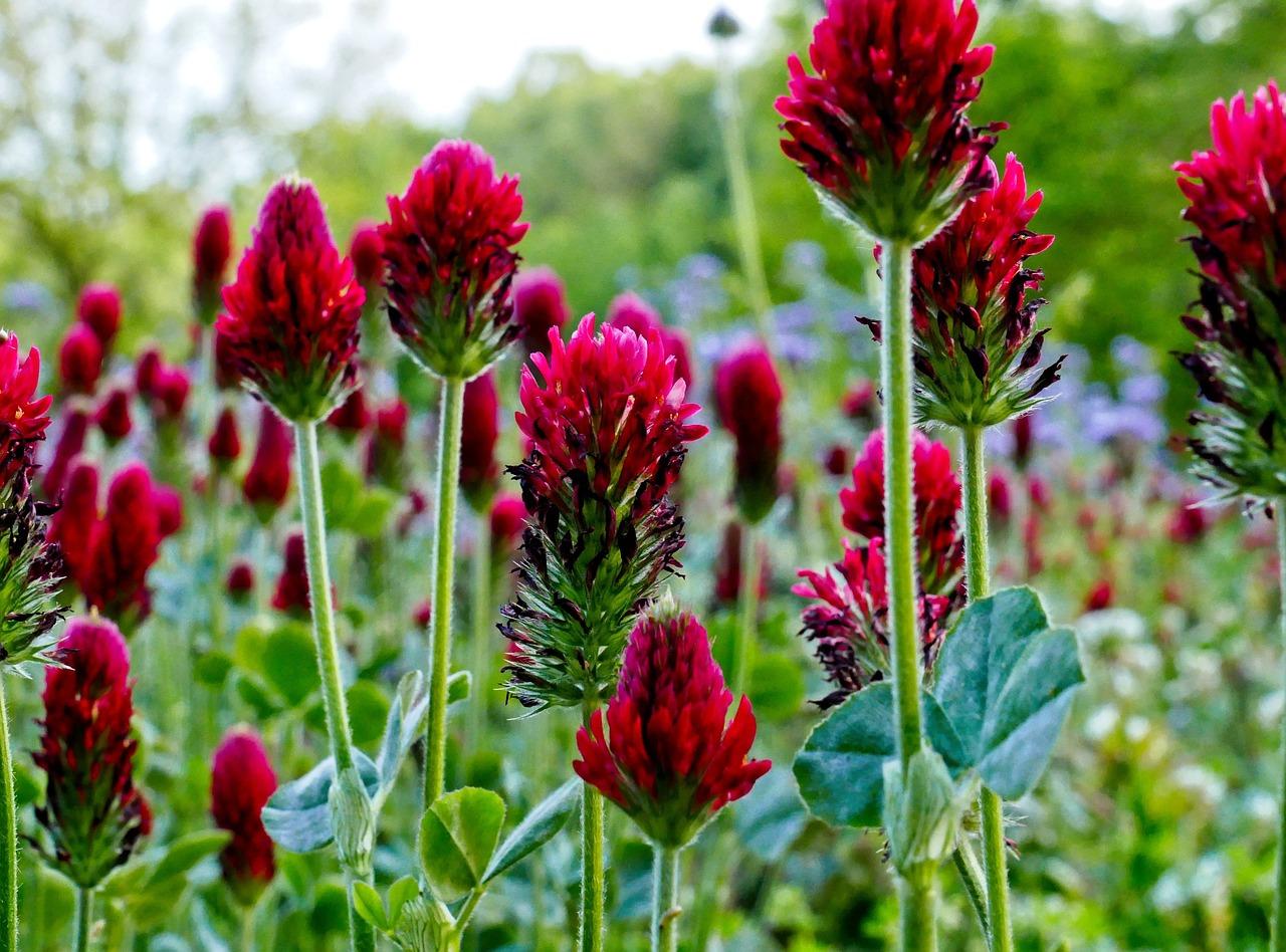 Wild Flowers Field Free Photo On Pixabay