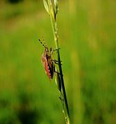 Bugs, Nature, Meadow, Insects