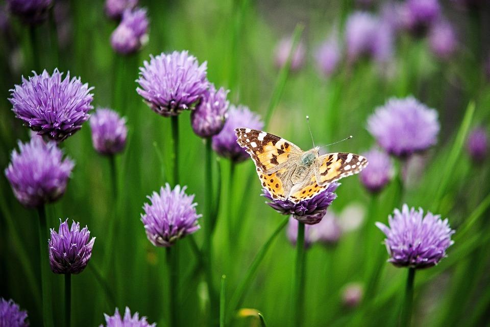 Fiore, Dettaglio, Macro, Natura, Impianto, Giardino