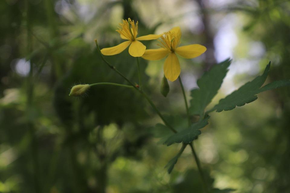 7b072d40a Příroda Venkovní Divoká Žluté - Fotografie zdarma na Pixabay