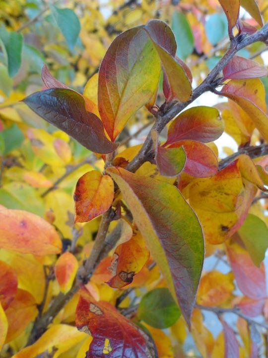 Sonbahar Boya Ağaç Pixabayde ücretsiz Fotoğraf
