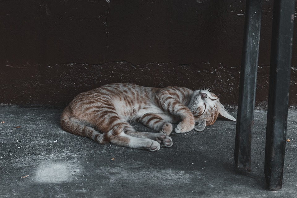 Zdarma obrázky kočička