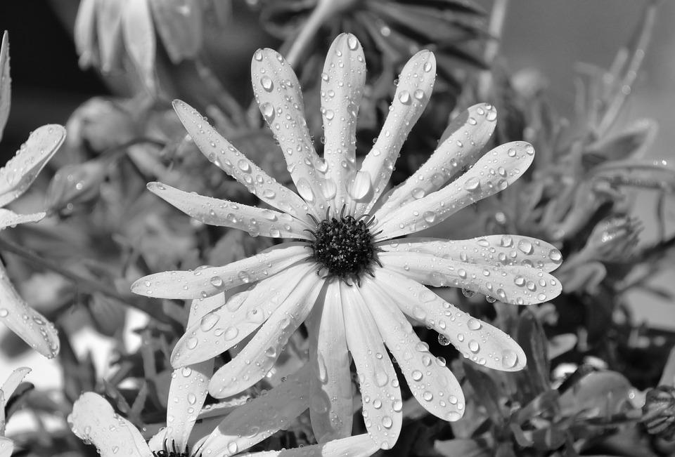 Fekete fehér képek