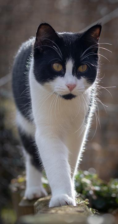 Cat, Balance, Domestic Cat, Pet, View, Nature, Garden