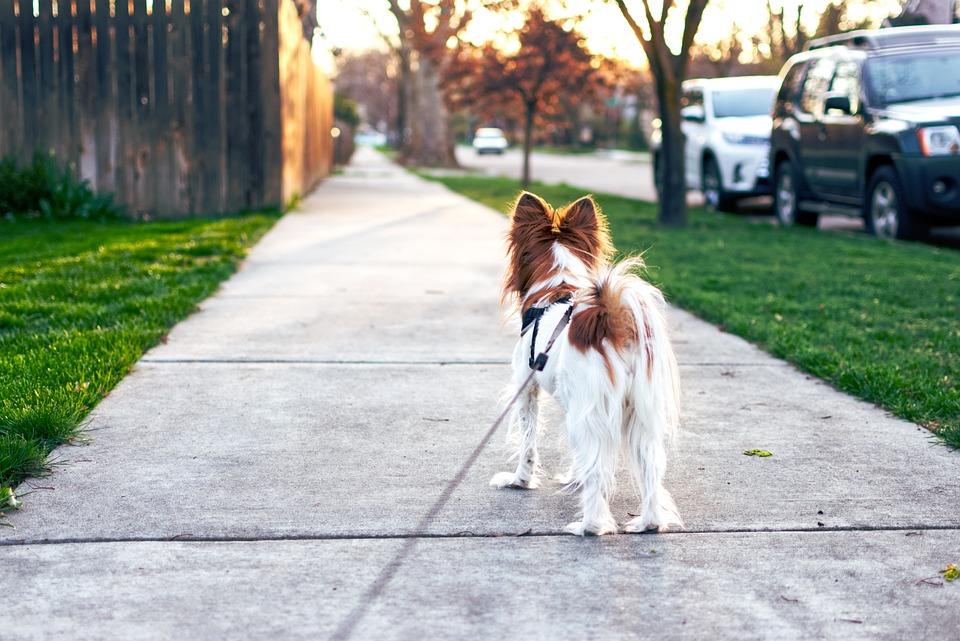 Dog, Sunset, Evening, Sky, Walking, Animal, Summer