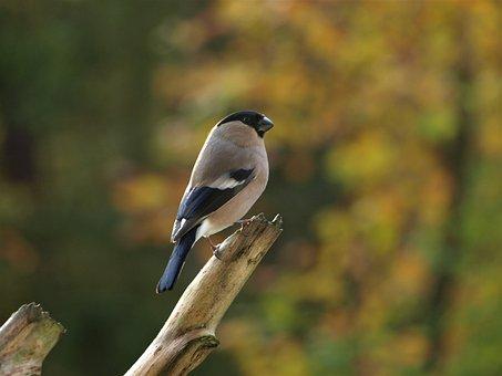 veľké čierne vtáky biele ženy