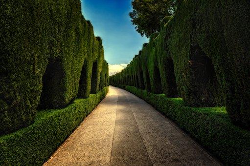 公園, 神秘的な, ヘッジ, 離れた, ギャング, 神秘的です, 気分, 雰囲気