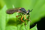 owad, latający, mucha