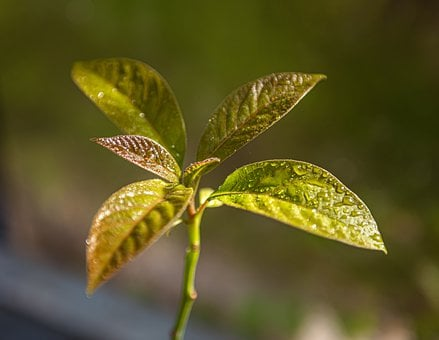 Plant, Avocado, Nature, Tree, Exotic