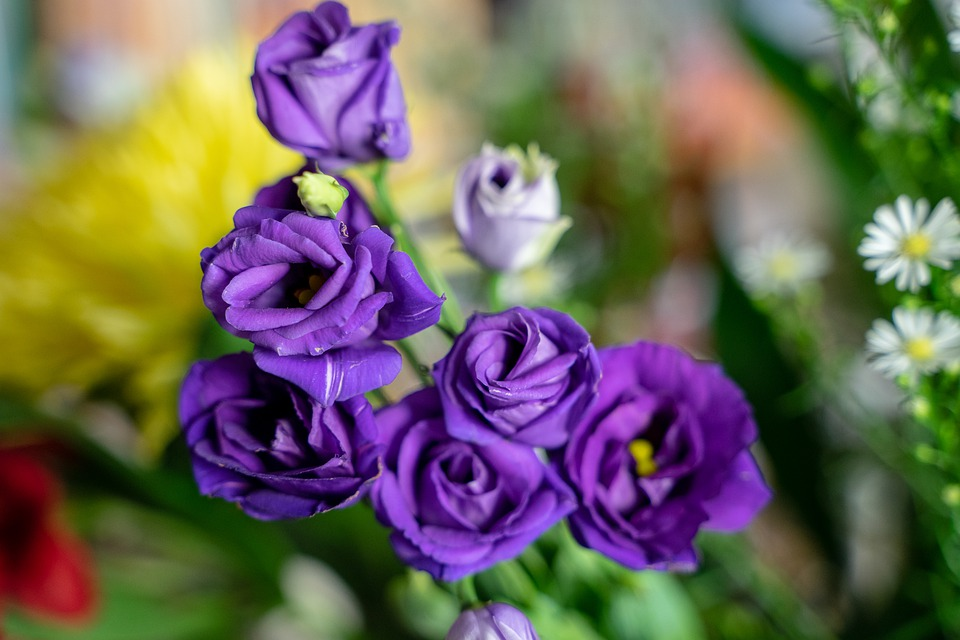 Mawar Ungu Bunga Foto Gratis Di Pixabay