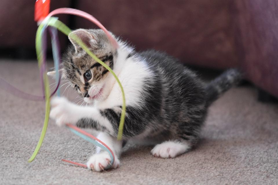 cat-4262737_960_720.jpg