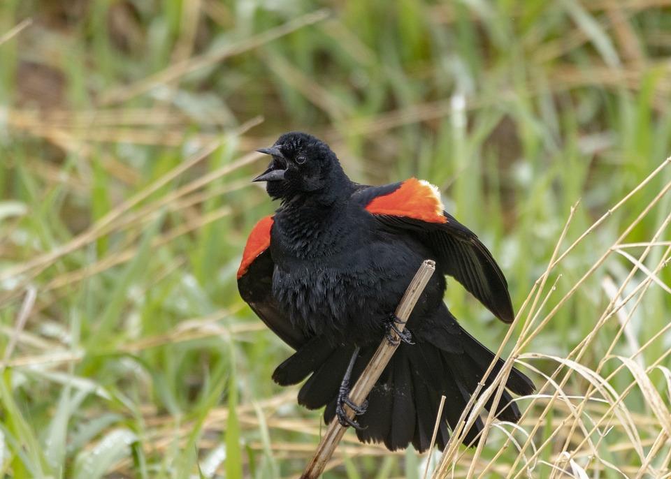 velké zadní ptáky