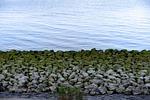kamienie, morze, morze wattowe