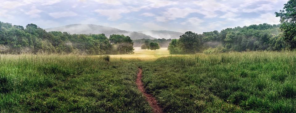 Grassland – Pixabay – 8moments