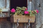 flower box, dekoracje kwiatowe, okno