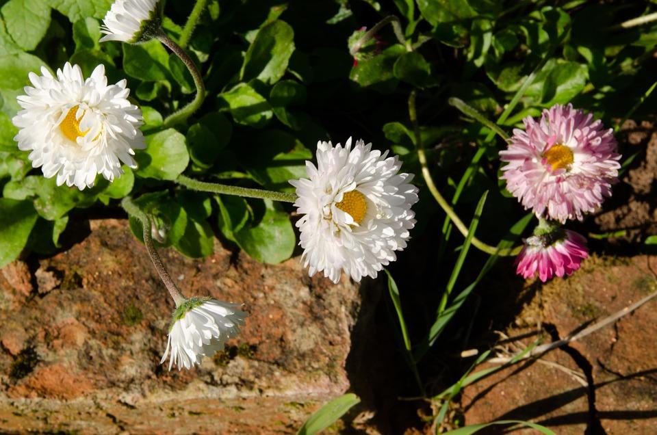 Fleurs Plate Bande Jardin - Photo gratuite sur Pixabay