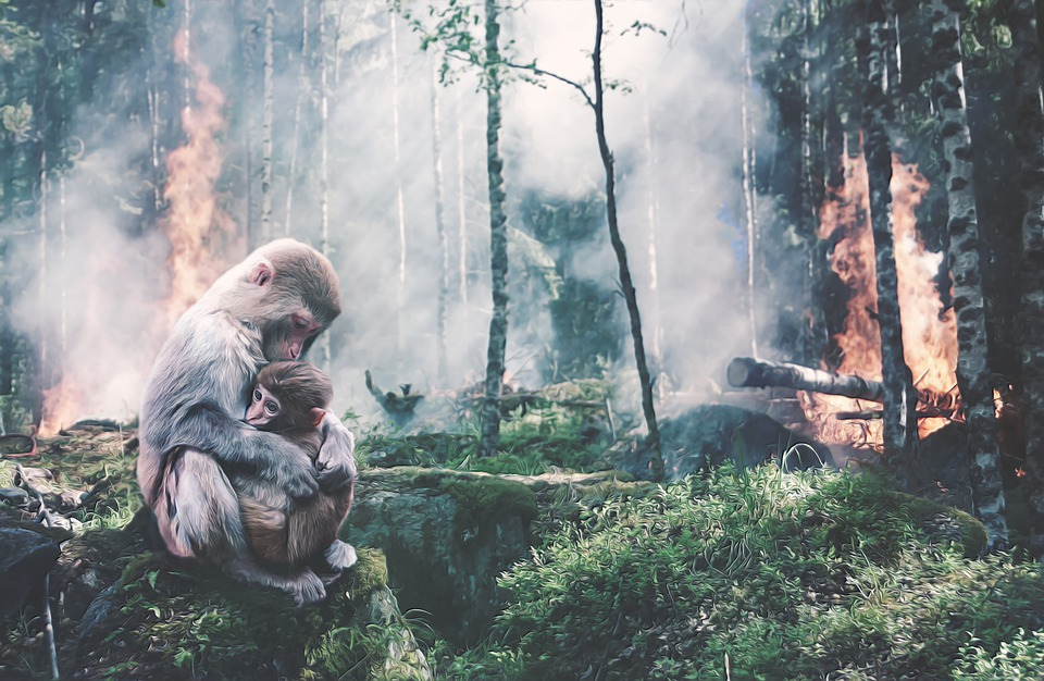 Ape, Baby, Forest Fire, Fear, Risk, Environment, Brand