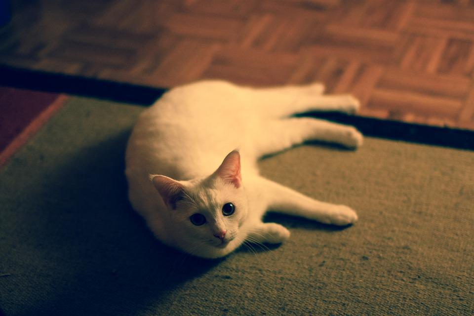 Котка, Сладък, Ретро, Домашни Любимци, Животните