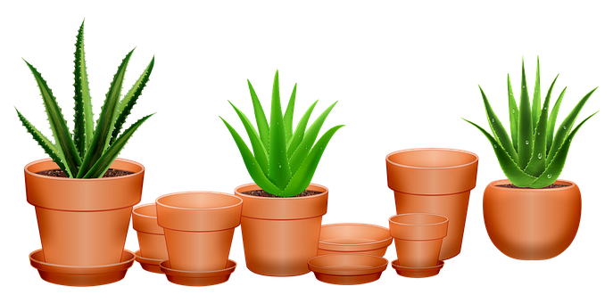 The Particular Important Uses of Aloe Vera Natural Health Supplements