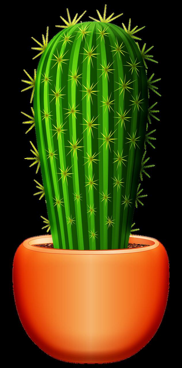 Aloe Vera Cactus Succulent Free Image On Pixabay