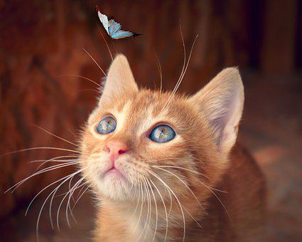 Cat, Butterfly, Kitten, Baby Cat, Red