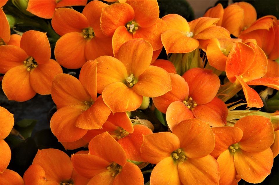 Fiori Arancioni.Fiori Flowers Arancioni Foto Gratis Su Pixabay