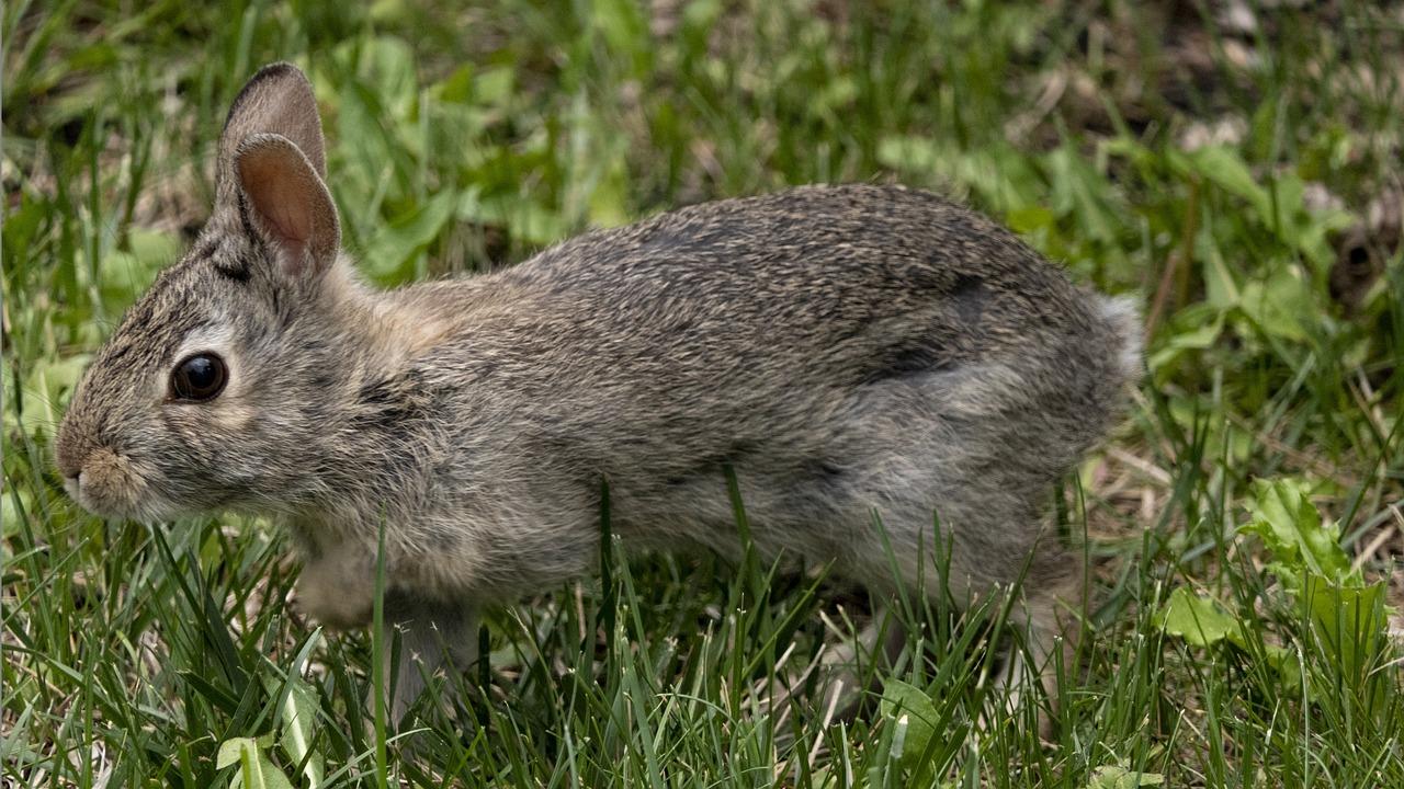 грызуны зайцы кролики фото описание между собой, плотно