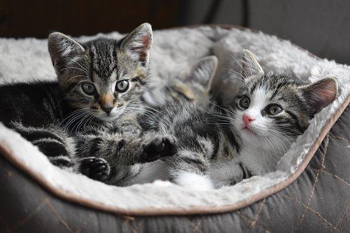 猫, 子猫, 小, ペット, かわいい, 魅力的な, 甘い, 遊び心のあります