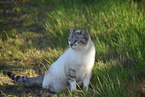 Sexy veľká mačička dievča