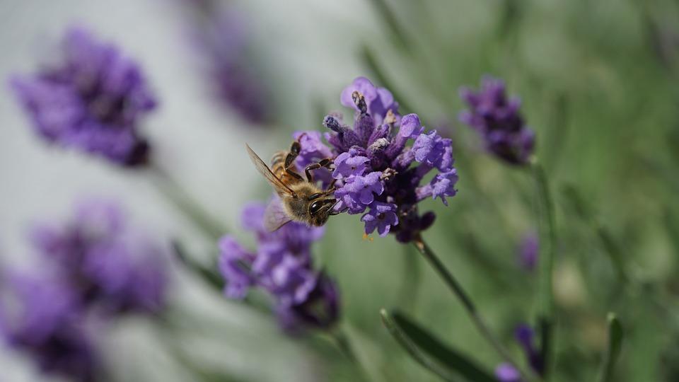 33++ Siklus hidup hewan serangga lebah terbaru